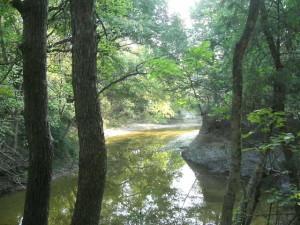 Bear Creek at back of Property